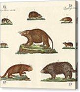 Spiny Animals Acrylic Print