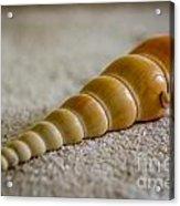 Spiral Shell Acrylic Print