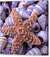 Spiral Shells And Starfish Acrylic Print