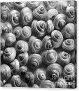 Spirals Black And White Acrylic Print by Priska Wettstein