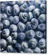 Spirals Blue Acrylic Print