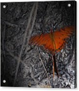 Spirit Butterfly Acrylic Print by Ella Char