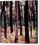 Spirit In The Trees Acrylic Print by Steven Valkenberg