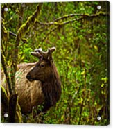 Spirit Of The Forest Acrylic Print by Stuart Deacon