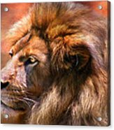 Spirit Of The Lion Acrylic Print