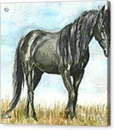 Spirit Wild Horse In Sanctuary Acrylic Print by Linda L Martin