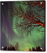 Spirits Of The Night    Acrylic Print