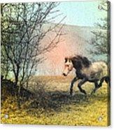 Spiritus Equus Acrylic Print