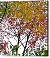 Splash Of Autumn Colors Acrylic Print