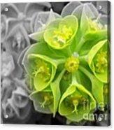 Splash Of Green Acrylic Print