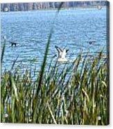 Splashing In The Lake Acrylic Print