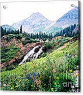 Splendid Wonder Acrylic Print