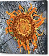 Split Sunflower Acrylic Print