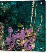 Sponge Condo Acrylic Print