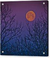 Spooky Beauty Acrylic Print