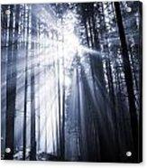 Spooky Forest Acrylic Print