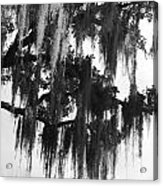 Spooky Trees Acrylic Print
