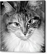 Spooleete. Cat Portrait In Black And White. Acrylic Print