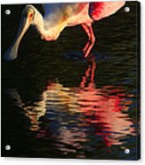Spoonbill Island Reflection Acrylic Print