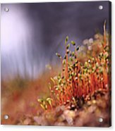 Sporophyte Colony Acrylic Print
