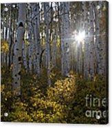 Spot Of Sun Acrylic Print by Jeff Kolker