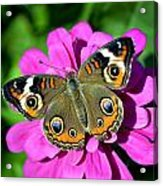 Spotted Butterfly On Pink Flower Acrylic Print