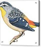 Spotted Diamondbird Acrylic Print