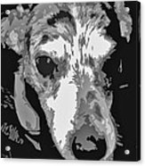 Spotted Dog Black And White Acrylic Print