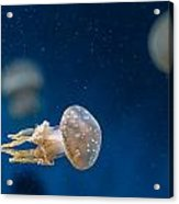 Spotted Jelly Aliens 2 Acrylic Print