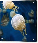 Spotted Jelly Fish 5d24949 Acrylic Print by Wingsdomain Art and Photography