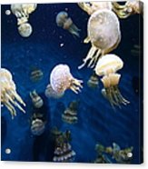 Spotted Jelly Fish 5d24951 Acrylic Print