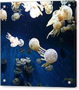 Spotted Jelly Fish 5d24952 Acrylic Print by Wingsdomain Art and Photography