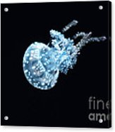 Spotted Jellyfish Acrylic Print by Charline Xia