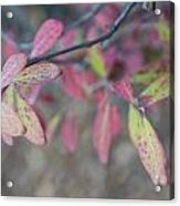 Spotted Leaves Acrylic Print