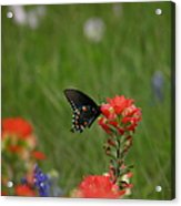 Spotted On Wildflower Acrylic Print