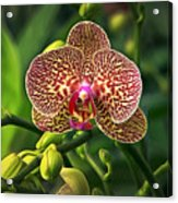 Spotted Orchid Acrylic Print