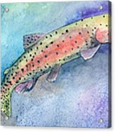 Spotted Trout Acrylic Print