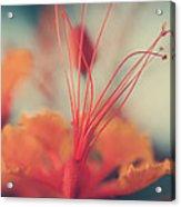 Spread The Love Acrylic Print