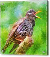 Spreading Bird Word Around Acrylic Print