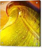 Sprial Leaf Acrylic Print