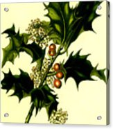 Sprig Of Holly With Berries And Flowers Vintage Poster Acrylic Print