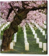 Spring Arives At Arlington National Cemetery Acrylic Print by Susan Candelario