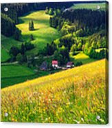 Spring At Black Forest Acrylic Print