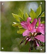 Spring Awakening Acrylic Print