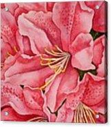 Spring Azalea Acrylic Print