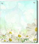 Spring Background With Daisies Acrylic Print by Sandra Cunningham