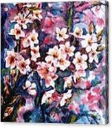 Spring Beauty Acrylic Print by Zaira Dzhaubaeva