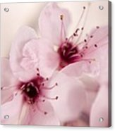 Spring Blooms 0174 Acrylic Print