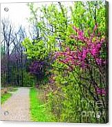 Spring Blooms Along The Path Acrylic Print