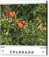 Spring Blooms In Colorado Acrylic Print